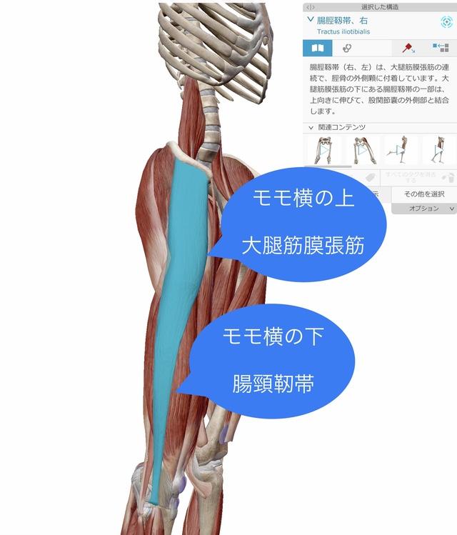 大腿筋膜張筋 腸脛靭帯